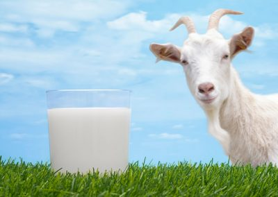 Goat and milk